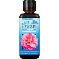 Kamelianäring - Camellia Focus, 300 ml-Näring för kamelia, azalea och andra surjordsväxter