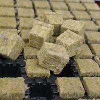 Rockwoolkuber, 77-pack i brätte-Rockwoolkuber för odling
