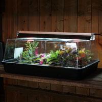 T5 UNO vaäxtbelysning över minidrivhus
