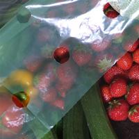 Aero-poly växtskyddsplast-Skyddsfilt för växtskydd och drivning av växter