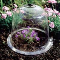 Baby Victorian Bell odlingsklocka - 3-pack-Odlingsklocka för drivning av växter