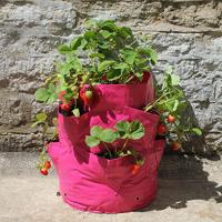 Ört- och jordgubbsodlingssäck, 2-pack,
