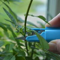 Liten trädgårdssax i plastficka