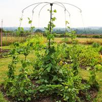 Växtstöd, Parasol Planter Support-Växtstöd för klätterväxter