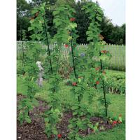 Växtstöd Pea & Bean Frame-Växtstöd för baljväxter, bönor