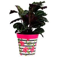 Kruka med rosa hibiskus-motiv för plantor inomhus och utomhus