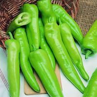 Chili PEPPER (Hot) Anaheim-Frö till Chili PEPPER (Hot) Anaheim