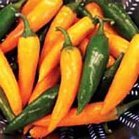 Chili PEPPER (Hot) Bulgarian Carrot-Frö till chilipeppar Bulgarian Carrot