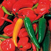 Chili PEPPER (Hot) Chilli Shake-Frö till Chilipeppar Chilli Shake