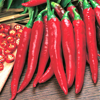 Chili PEPPER (Hot) Rokita-Frö till Chilipeppar Rokita
