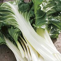 Frö till Mangold 'Verde a Costa Argentata', Beta vulgaris
