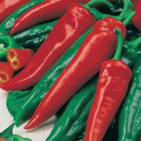 Paprika PEPPER (Sweet) Friggitello-Frö till Paprika