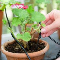 Flopro droppbevattning för växthus, bild 3