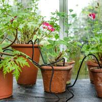Flopro droppbevattning för växthus, bild 2