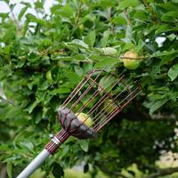 Fruktplockare med teleskopskaft, Grön-äppelplockare med förlängd skaft