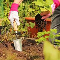 Planteringsspade, Hand Transplanting Trowel, Planterngsspade i traditionell design
