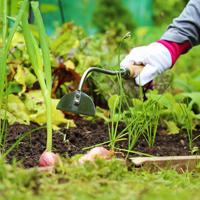 Ogräsraka för rensning i trädgården