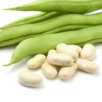 Fransk dvärgböna Cannellino, organic-Ekologiskt frö till Fransk dvärgböna Cannellino