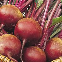 Rödbeta Bolivar, organic-Ekologiskt frö till Rödbeta Bolivar