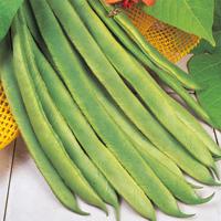 Rosenböna Enorma, organic-Ekologiskt frö till Rosenböna Enorma
