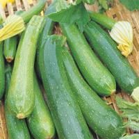 Zucchini Partenon F1, organic-Ekologiskt frö till Zucchini Partenon F1