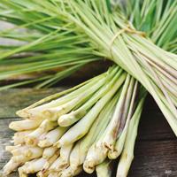 Citrongräs-Frö till Citrongräs från Suffolk Herbs
