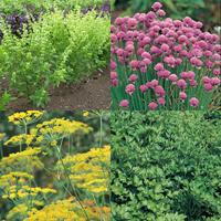 Kryddblandning för fönsterbrädan-Frö till Kryddblandning för fönsterbrädan från Suffolk Herbs
