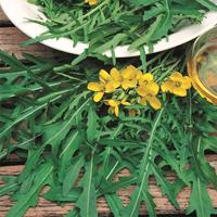 Vild ruccola-Frö till Vild ruccola från Suffolk Herbs