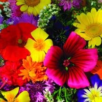 Sommarblommor, Mix med höga sorter-Fröer till Hardy Annuals, Tall Cut Mixed