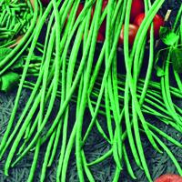 Klätterböna, Yard Long-Fröer till Klätterböna, Yard Long