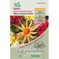 Dahlia, Cactus Hybrids Mixed, Fröpåse till Dahlia, Cactus Hybrids Mixed