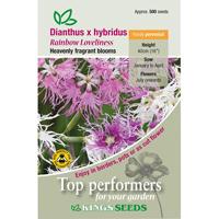 Nejlika, Dianthus Hybridus Rainbow Loveliness, Fröpåse till Dianthus Hybridius, Rainbow Loveliness