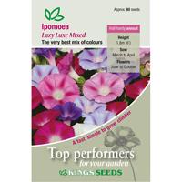 Blomman för dagen, Ipomoea Lazy lux, Fröpåse till Ipomoea Purpurea, Lazy Luxe Mixed
