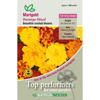 Tagetes, Marigold French Durango Mixed, Fröpåse till Tagetes French, Durango Mixed