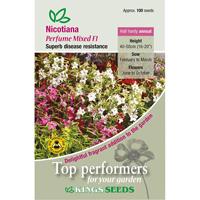 Tobaksblomma, Nicotiana, Perfume Mixed F1, Fröpåse till Nicotiana, Perfume Mixed F1