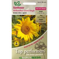 Solros, Sunflower Giant Single, Fröpåse till Sollros Sunflower, Giant Single