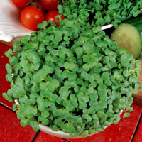 Groddfrö - Green Peas, organic-Groddfrö till ärter, eko