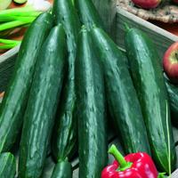 Gurka, Burpless Tasty Green F1-Fröer till Gurka, Burpless Tasty Green F1