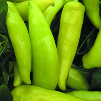 Chili, Hungarian Hot Wax-Fröer till Chili, Hungarian Hot Wax