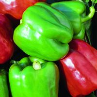 Fröer till Paprika Chili, Mix