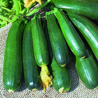 Zucchini-Fröer till Zucchini