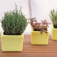 Klara Kipo Plant Pot, yellow, Klra Kipo planteringskruka med bevattning, gul