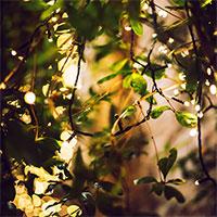 Glimmer ljusslinga i buske