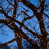 Glimmer ljusslinga i träd