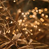 Glimmer ljusslinga i torkat gräs