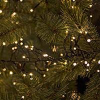 Cluster ljusslinga i gran
