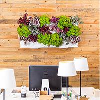 Vit växtvägg med begonior på kontorsvägg