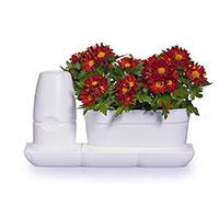 Krukväxter i självbevattningskruka Minigardcen Basic Uno