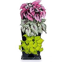 Krukväxter odlade i växtvägg Minigarden One