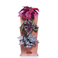 Minigarden One, vertikalodling av bladbegonia